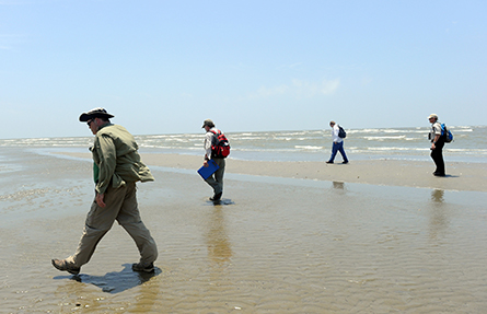 Four people walking on a beach.