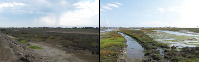 Photo: A before and after of a project that restored waterflow to a wetland.