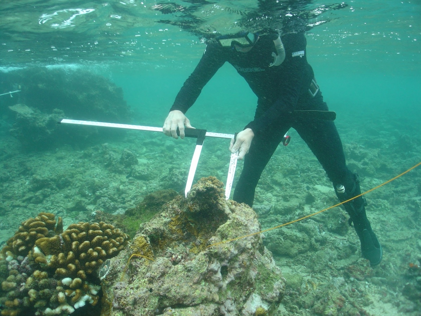 An underwater image of a diver using a measuring instrument to survey coral.