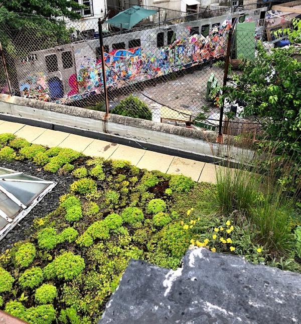 Urban landscape: Garden with building in background.