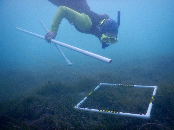 Person diving towards a plastic grid on the sea floor.
