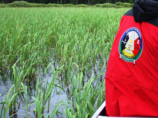 A lake of wild rice as seen from a boat.