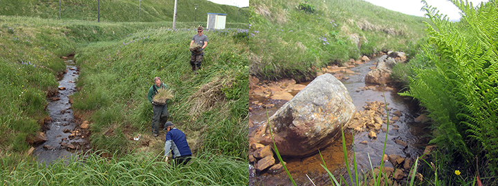 People replanting vegetation on Helmet Creek and close up of stream.