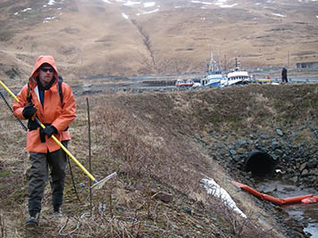 A man on Adak Island is holding an electrified wand and wearing the power pack for sampling fish in a stream via the electrofishing method.