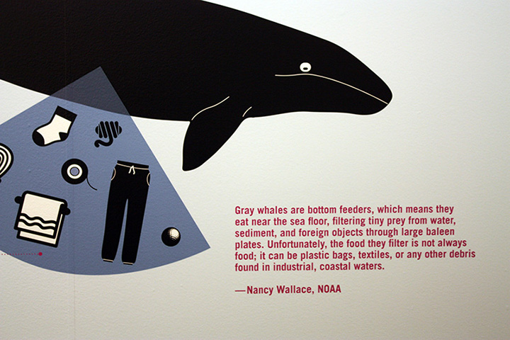 A painting of a gray whale and marine debris on a wall with a quote from the Marine Debris Program Director about debris' impacts on large marine mammals.