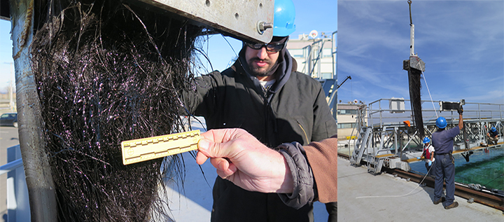 Left: A hand holds a ruler next to oiled baleen hanging from a clamp next to a man. Right: People attaching baleen plates in a clamp to the moving bridge over a saltwater test tank at Ohmsett.