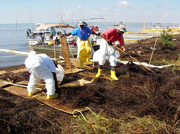 Cleanup workers during the Deepwater Horizon oil spill used walk boards while raking and cleaning marshes to avoid causing further damage to the oiled marshes in Barataria Bay.