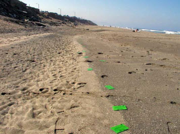 Photo: Green drift cards on a sand beach.