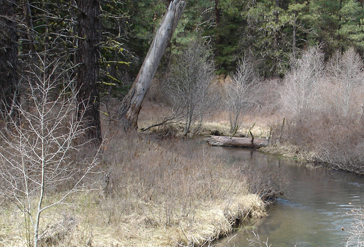 Streams in the Beaver Creek watershed no longer have the same influx of trees and other large pieces of wood.