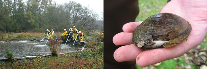 Left, cleanup workers spray water into river sediments from a boat and at right, a hand holding a crushed mussel.