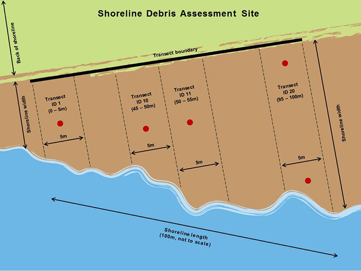 Graphic showing an example 100 meter stretch of beach with four 5 meter transects.