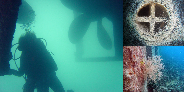 Left, diver inspecting a vessel hull underwater. Top right, barnacles growing on a ship hull's seawater intake. Bottom right, a bryozoan marine invertebrate growing on a seawall at Midway Atoll.