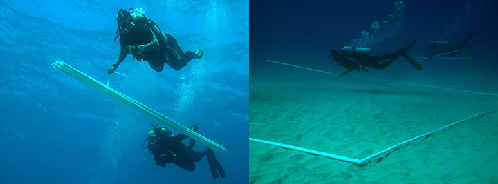 Divers bring PVC pipes down to the seafloor and lay them into a square.