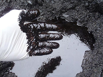 Gloved hand dipped in black oil in a pool of oil in shoreline sediments.