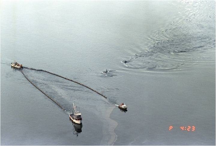 Killer whales swimming alongside boats skimming oil from the Exxon Valdez oil spill.