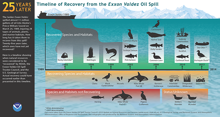 Illustrated timeline of ecological recovery in 25 years since the Exxon Valdez oil spill.