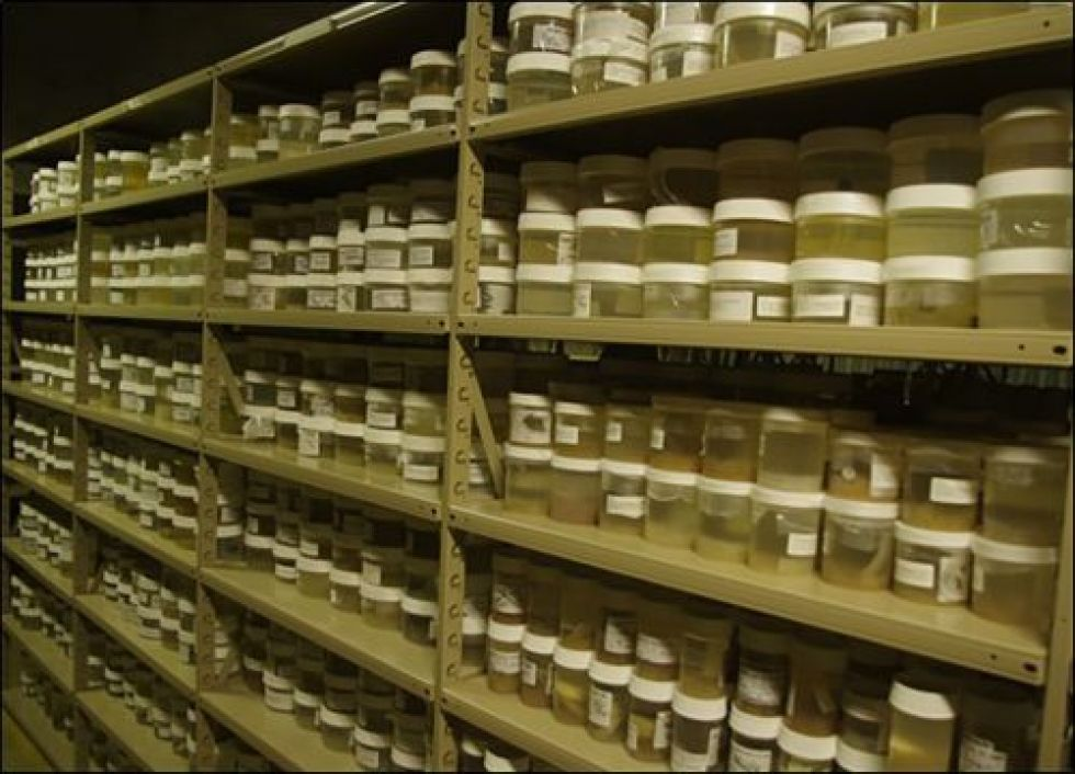 Shelves of samples in jars.