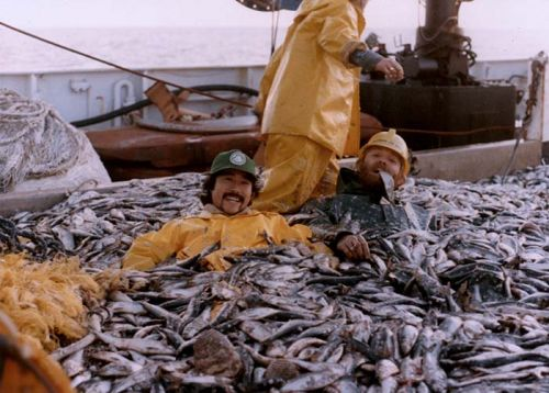 Three men in a pile of fish on a vessel.