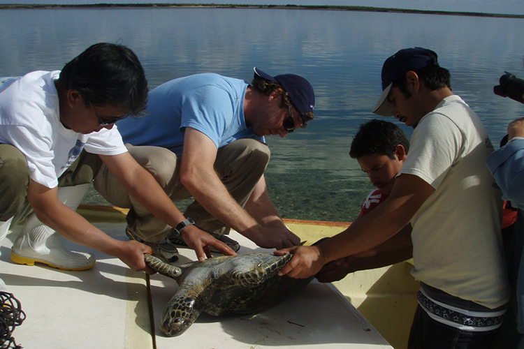 A group of people on a boat holding a sea turtle.