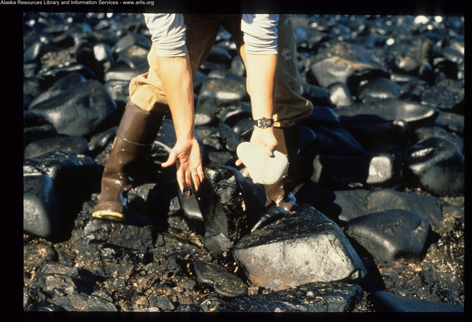 An image of someone with a rock in one hand and oil smeared on the other standing on an oiled rocky shoreline.