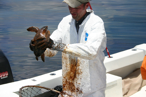 Man in white coat holding an oiled turtle.