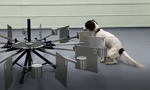 Dog using a tool to detect an oil sample.