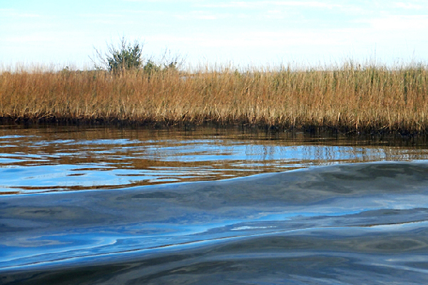 Oil on marsh grass with water in foreground.