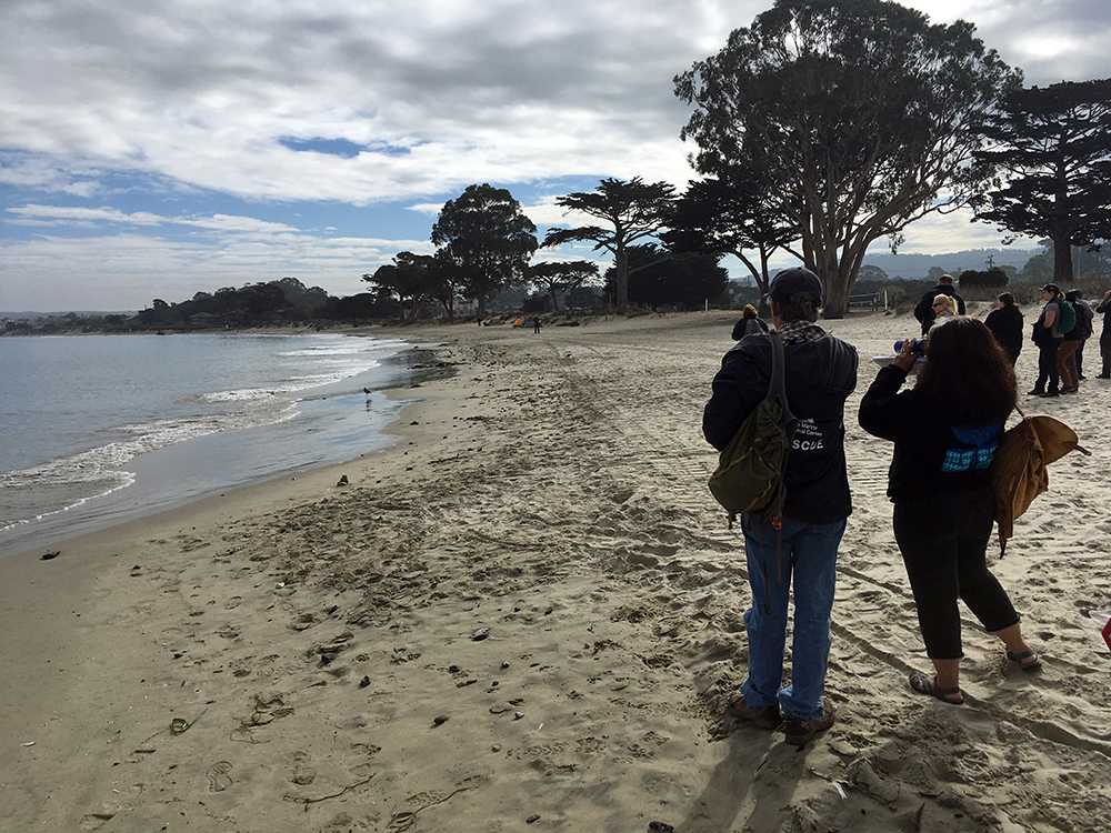 A group of people look down the shoreline of a sandy beach lined with trees.