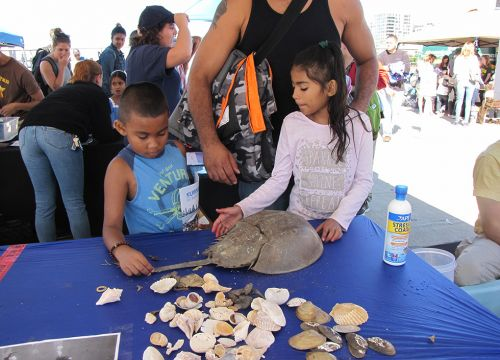 An adult and two children look at horseshoe crab on a table.