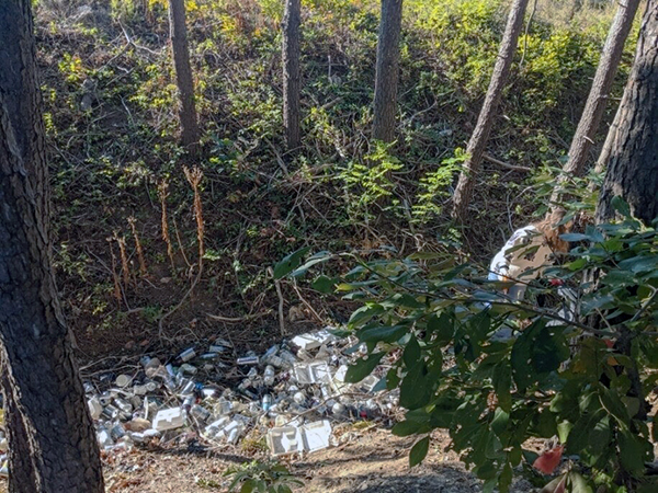 Debris at the bottom of a wooded ravine.
