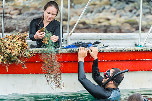 Woman in a boat with nets; man in the water in a wet suit.
