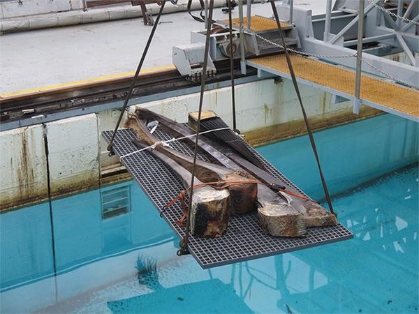 Baleen plates being lowered into the water.
