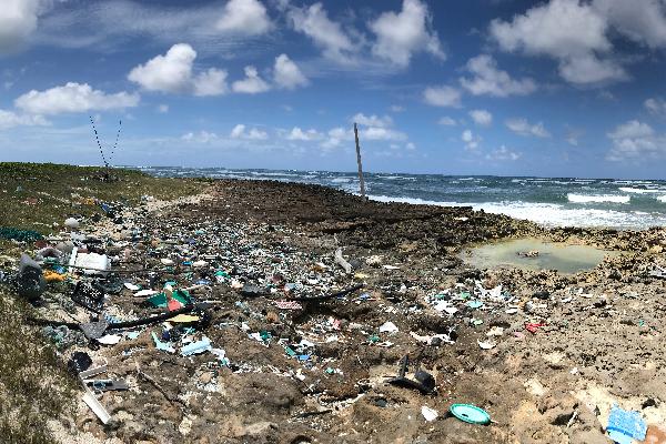 Beach scene with debris on the sand.