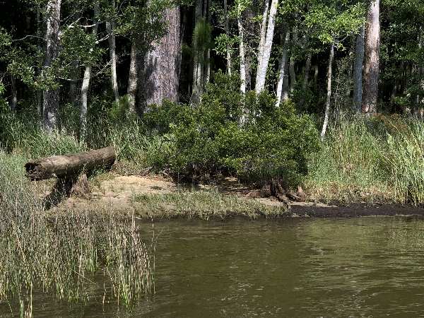 Vegetation at the edge of a body of water.