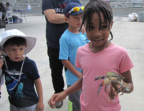 Child holding a blue crab.