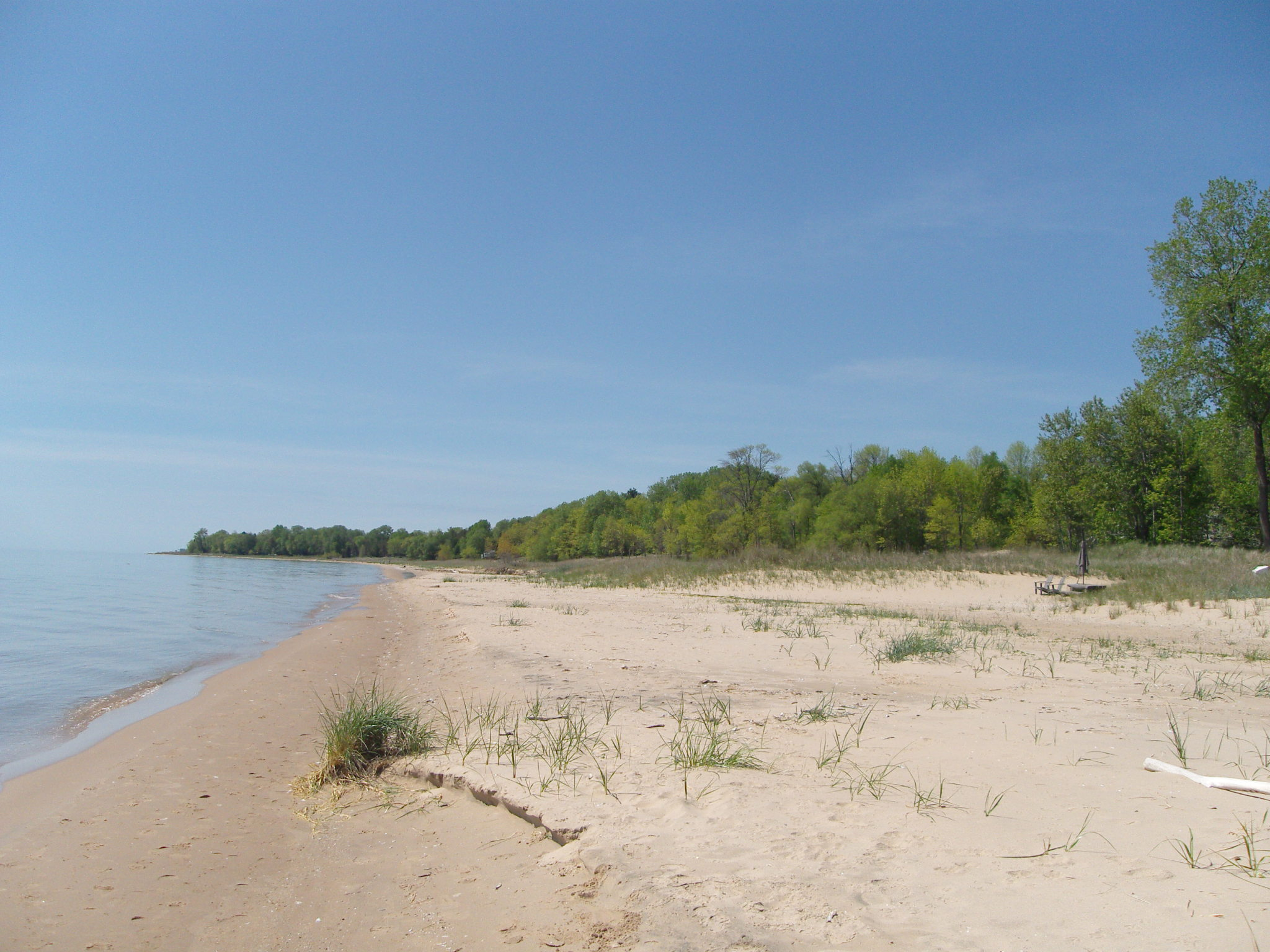 A beach with a treeline in the background.