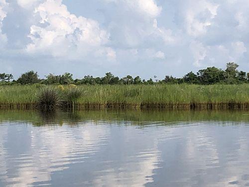 Oil visible on marsh grass.