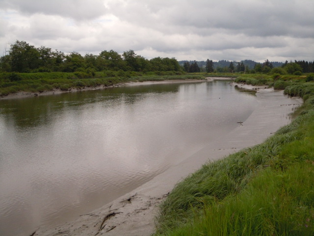 A slough along a river.