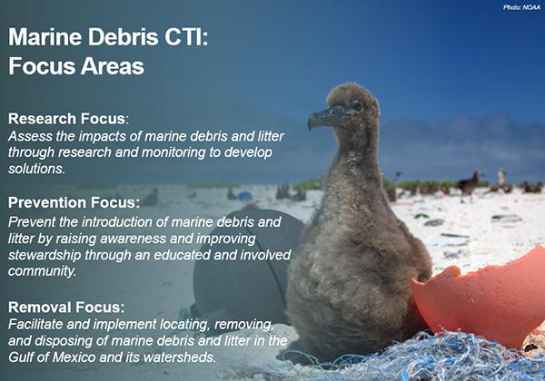 Baby bird with marine debris on a beach.
