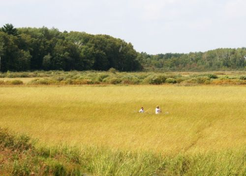 Two people on a boat navigating through dry wild rice plants.