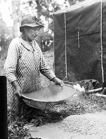 A woman winnowing rice.