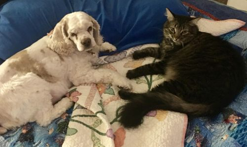 A dog and a cat, laying on a blanket.