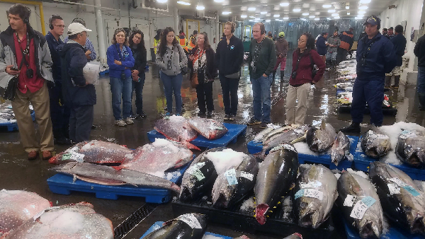 Group of people standing around dead fish laid out with ice.