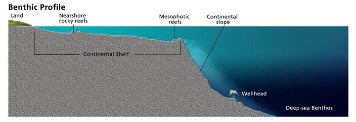 An infographic showing a benthic profile consisting of land, nearshore rocky reefs, mesophotic reefs, continental slope, wellhead, and deep-sea Benthos.