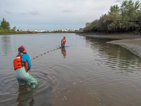 Two people in in life vests pulling a net through water.