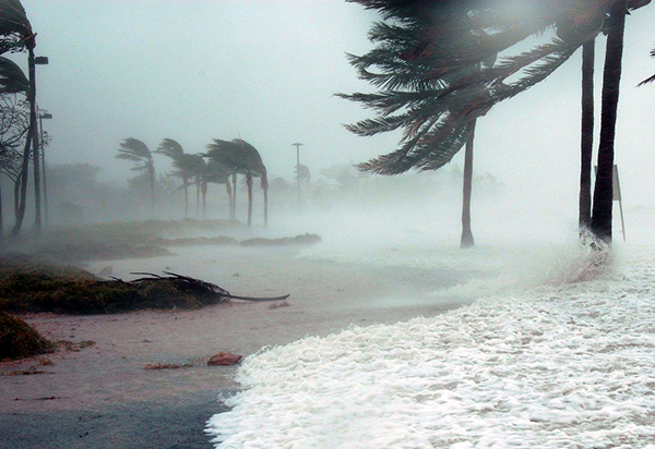 Palm trees blowing in strong wind on a beach.