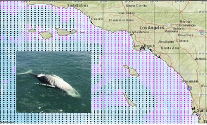 Map of whale search