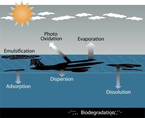 Figure showing the weathering processes affecting oil spills.