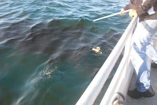 A person on a boat running a device through a slick of oil in the water.