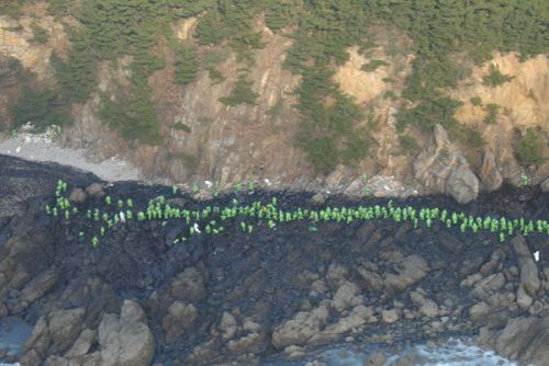 Workers on the South Korean shoreline clean up spilled oil.